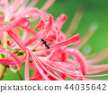피안 꽃에 개미 44035642