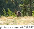 馴鹿或馴鹿 44037287
