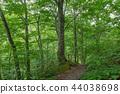 【아오모리 현 시라 카미 산지] 세계 유산 시라 카미 산지의 너도밤 나무 원생림은 투명한 녹색의 세계 44038698