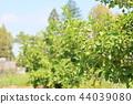 레몬의 열매 44039080