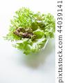 양상추, 레터스, 야채 44039141