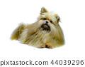 Cute dog 44039296