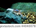 Crayfish in the aquarium 44040078