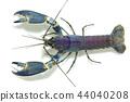 crayfish in the aquarium 44040208