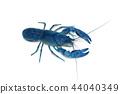 crayfish in the aquarium 44040349