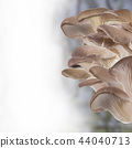 Oyster mushroom on white background 44040713