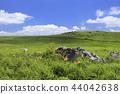 7 월 시코쿠 카르스트 - 시코쿠의 여름 - 44042638