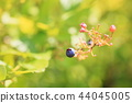 블루 베리 열매 44045005