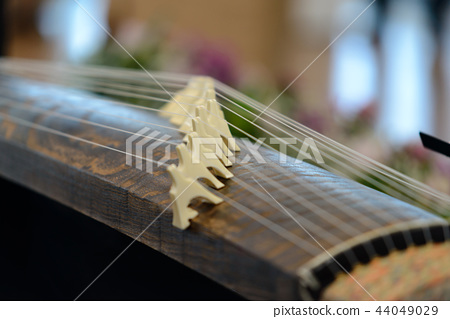 Koto - traditional musical instrument of Japan 44049029