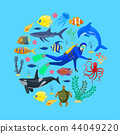 Ocean animals and diver 44049220