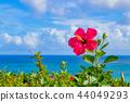 Okinawa Ishigakijima Tamatorizaki Observatory Hibiscus and the sea 44049293