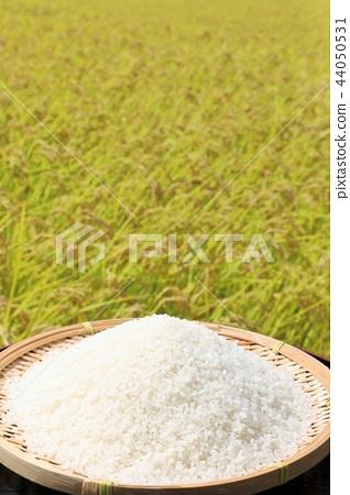 Fall rice 44050531