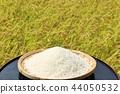 Fall rice 44050532