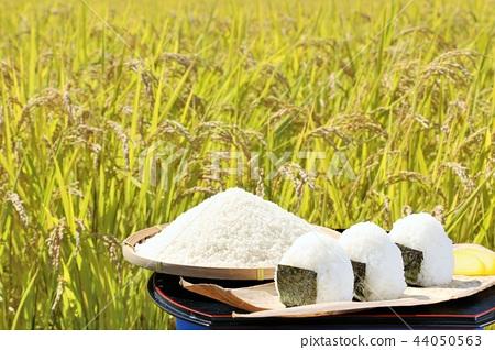 秋天米领域和碗米饭团 44050563