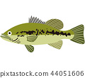 fish, fishes, black bass 44051606