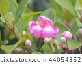 花朵 植物 台灣 44054352