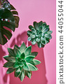 Top view shot succulent plant Echeveria, green leaves Monstera plant Philodendron with shadows on a 44055044