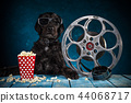 Black funny dog with retro film production accessories. 44068717