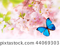 Spring blossoms with exotic butterfly. 44069303