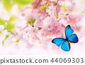 spring blossom background 44069303