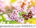 Spring blossoms with exotic butterfly. 44069317