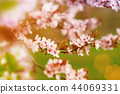 Spring border background with pink blossom 44069331