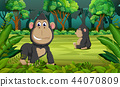 the forest background with two gorilla playing  44070809