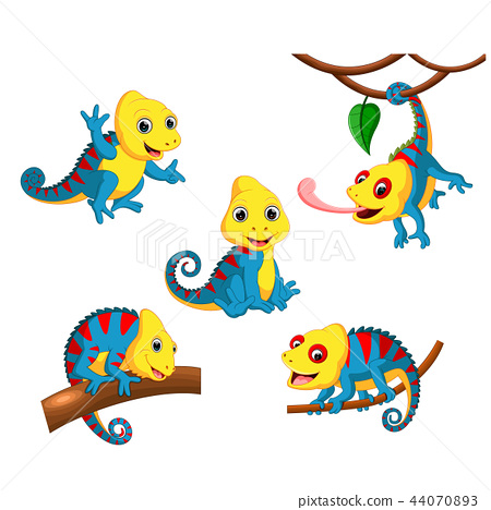 the collection of the chameleon 44070893