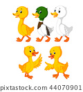 the collection of the cute ducks  44070901