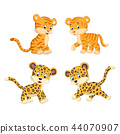 the collection of the tiger and leopard 44070907
