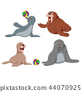 the collection of the cute seals 44070925