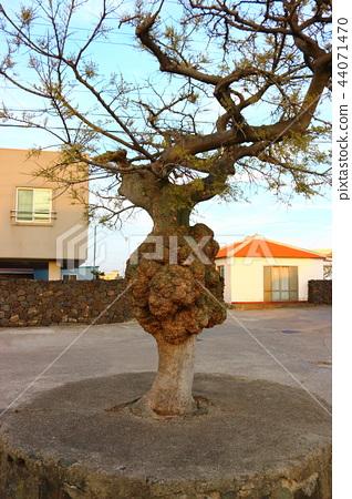 Tree, hump, 44071470