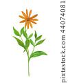 耶路撒冷朝鮮薊向日葵tuberosus 44074081