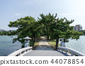 pine tree forest in ohori park 44078854