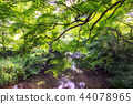 lush forest over the creek 44078965