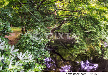 lush forest over the creek 44078966