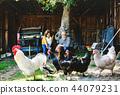 A senior couple with hens on a farm. 44079231