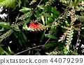 開花在Mitaka Nakahara的Brassicum花 44079299