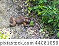 猩猩 動物 猴子 44081059