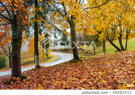 trees in colorful foliage by the road 44082411
