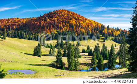 splendid autumn landscape on a bright day 44082431