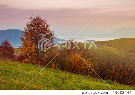late autumn dawn with pink sky in mountains 44082444