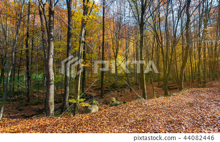 almost leafless forest in autumn 44082446