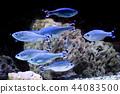 fish, sea, exotic 44083500