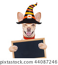 halloween  ghost  dog trick or treat 44087246