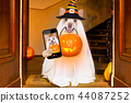 halloween  ghost  dog trick or treat 44087252