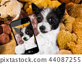 cozy  dog in bed with teddy bears 44087255