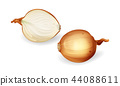 yellow onion bulb with sliced half set 44088611