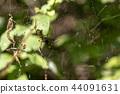 蜘蛛 蜘蛛網 風景 44091631