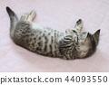 蜡肠猫 小猫 猫咪 44093550